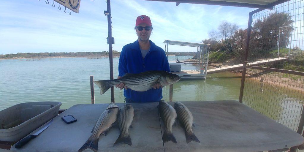 cut bait for striper